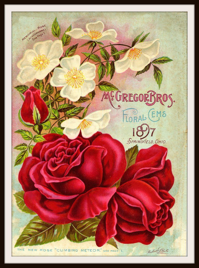 Vintage Reproduction Seed Pack Cover Art Print Wall decor, Walls