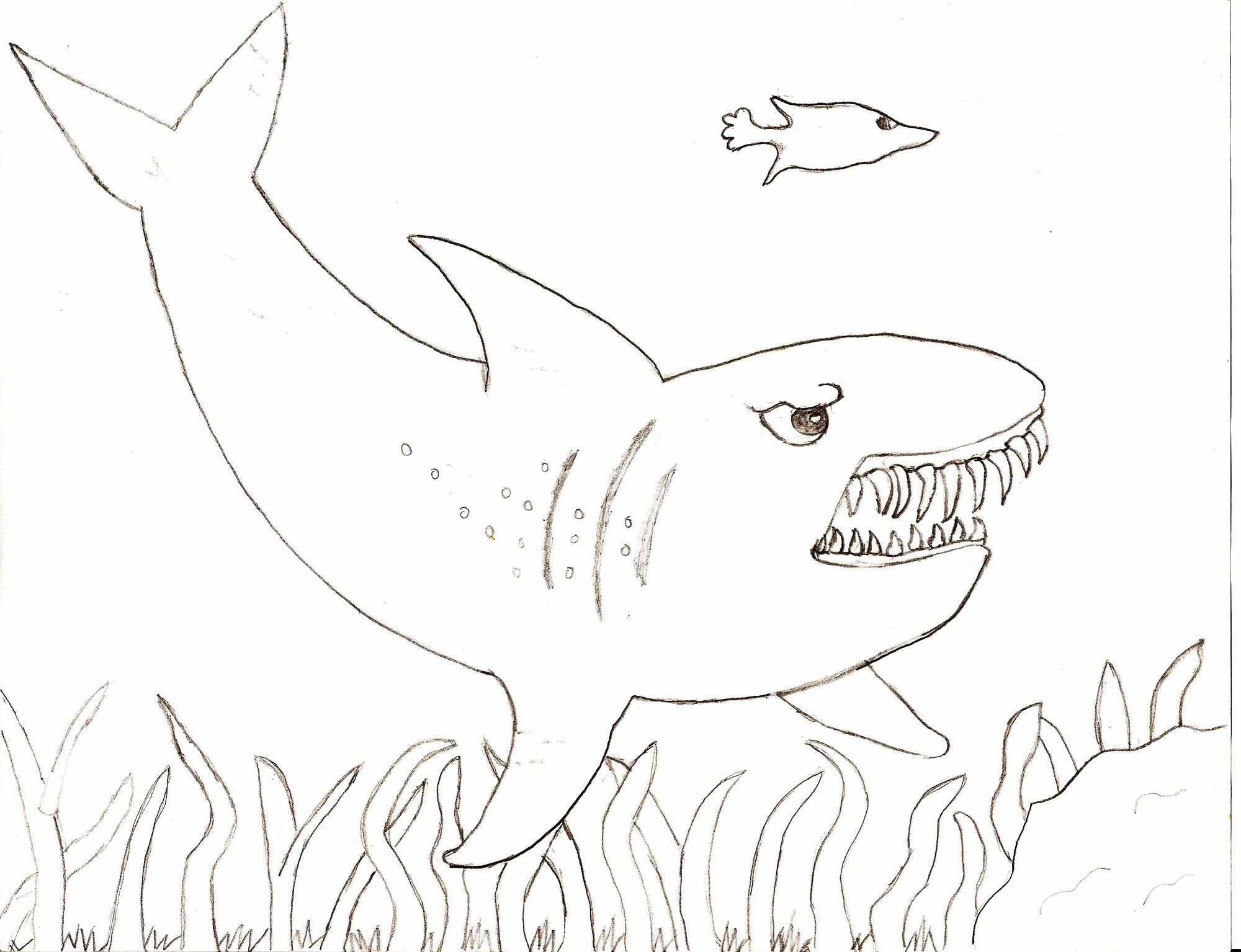 Shark Sheets For Kids | Activity Shelter | Coloring Pages for Kids ...