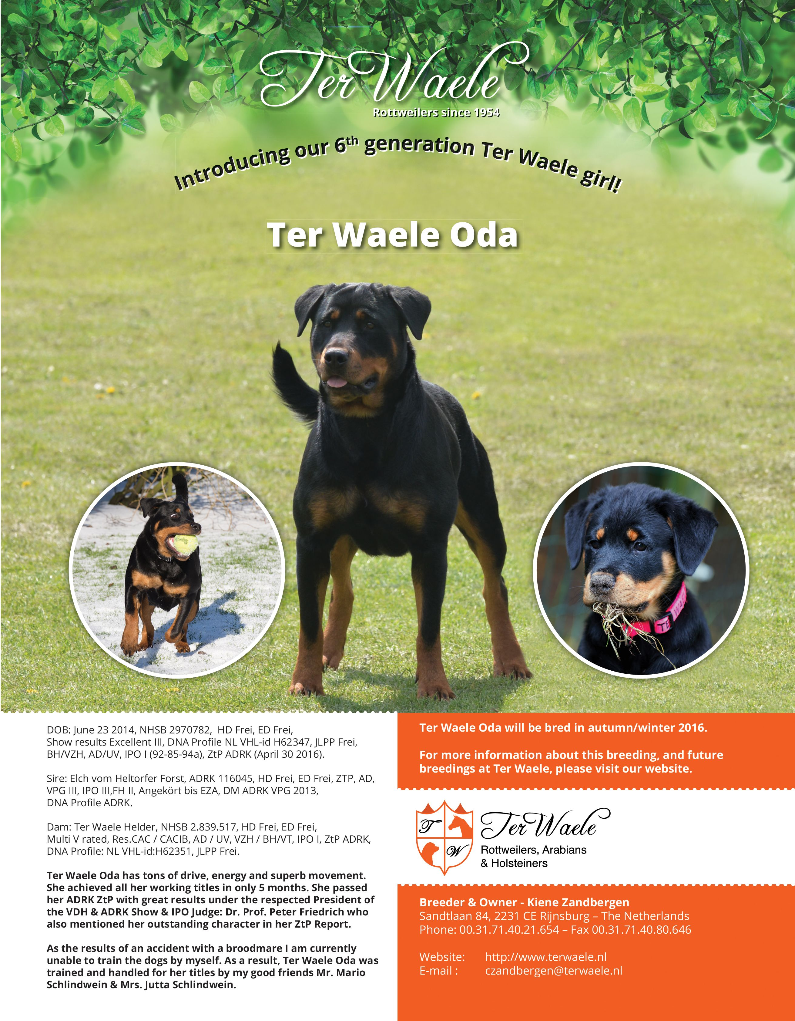 Ter Waele Oda will be bred this winter TerWaele Rottweilers since ...