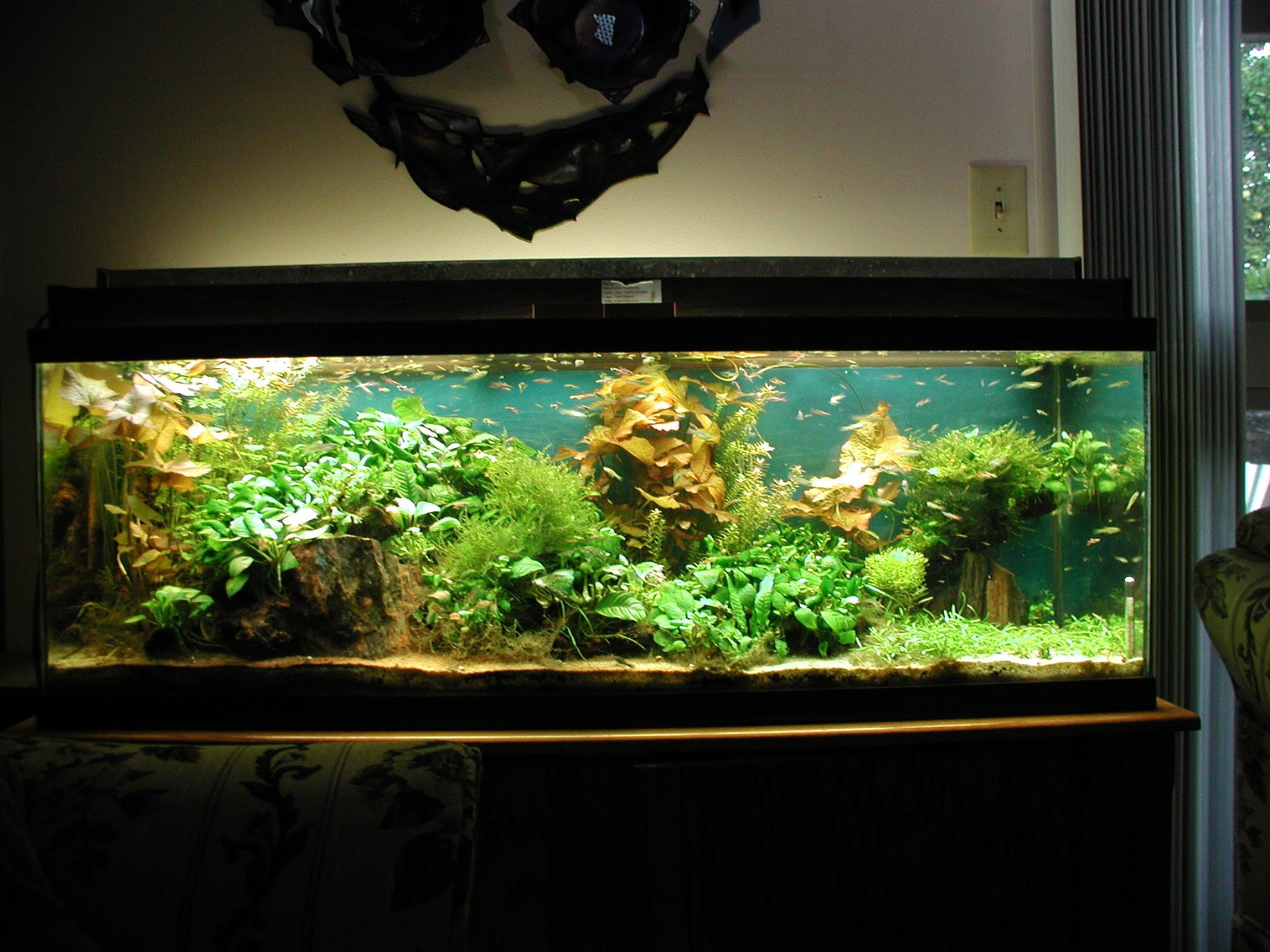 Fish Aquarium - Find this pin and more on fish tank aquarium