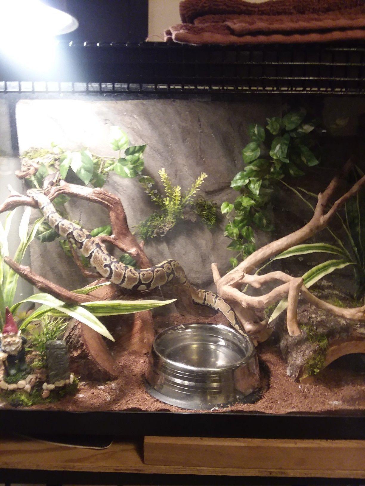 Diy Reptile Enclosure Coffee Table Snake Enclosure Diy Reptile Reptile Enclosure