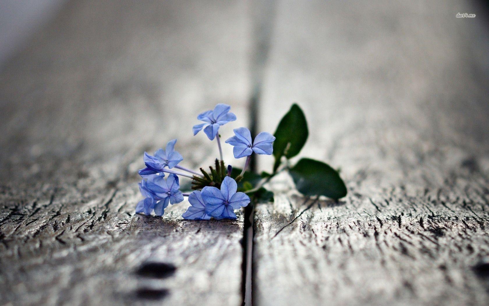 Small blue flower flowers pinterest blue flowers flower and small blue flower izmirmasajfo