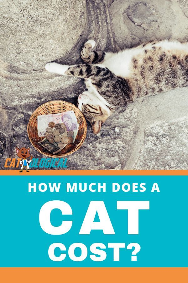 How Much Does A Cat Cost? Annual Expenses Revealed Pet