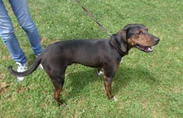Adopt Colton on | Congrats! | Plott hound, Dogs, Adoption