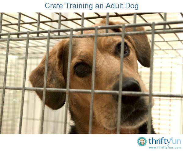 Crate Training An Adult Dog Dog Training Dog Behavior Training