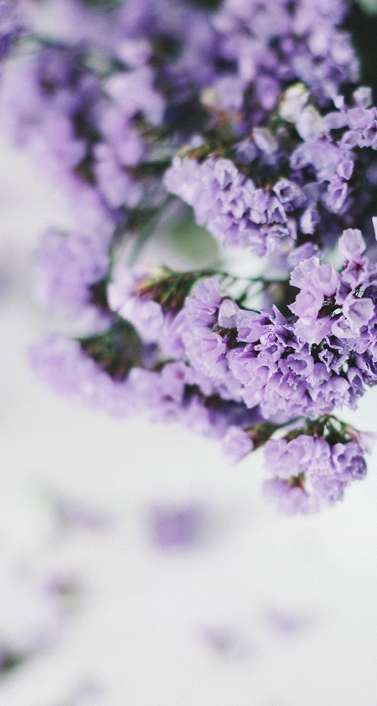 Lilac Wallpaper Background Hd Iphone Flowers Spring Flowers Wallpaper