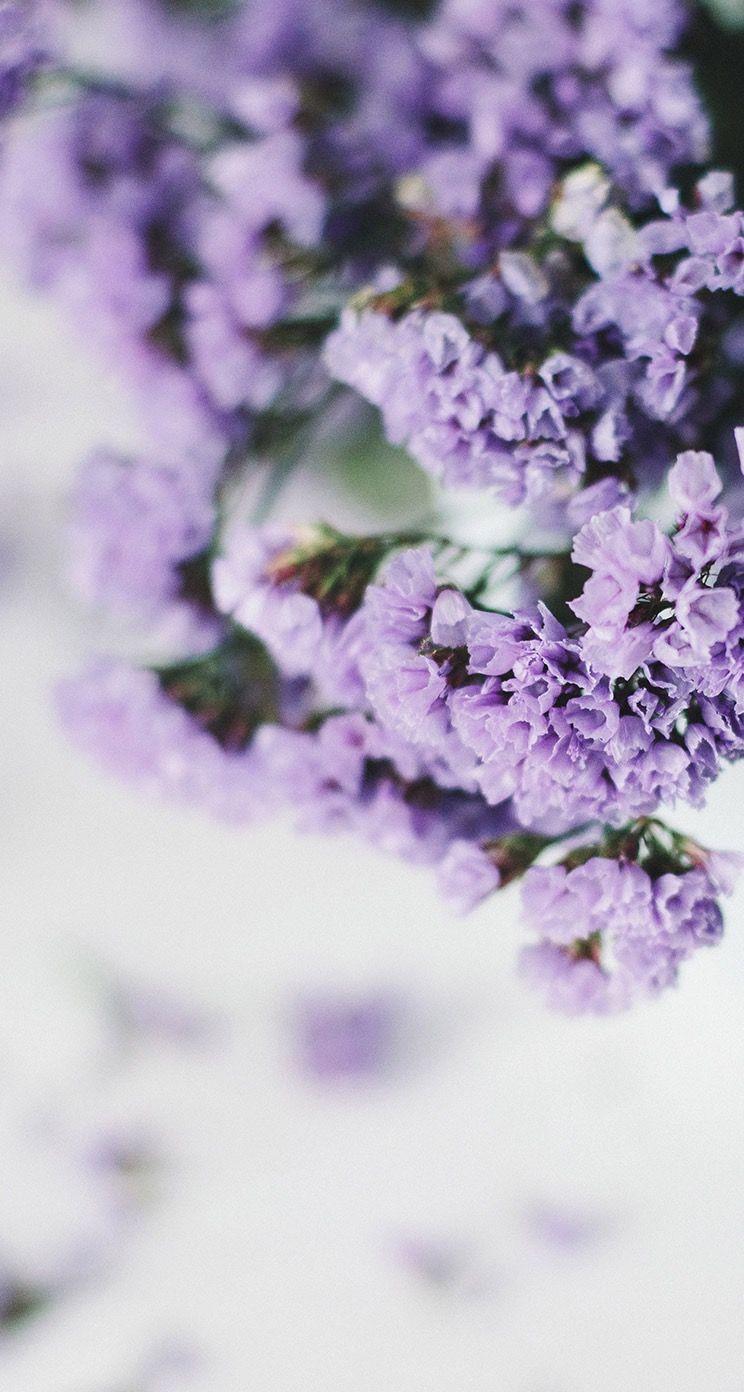 Lilac Flower Lavender Wallpaper Fotografi Alam Latar Belakang Bunga Liar