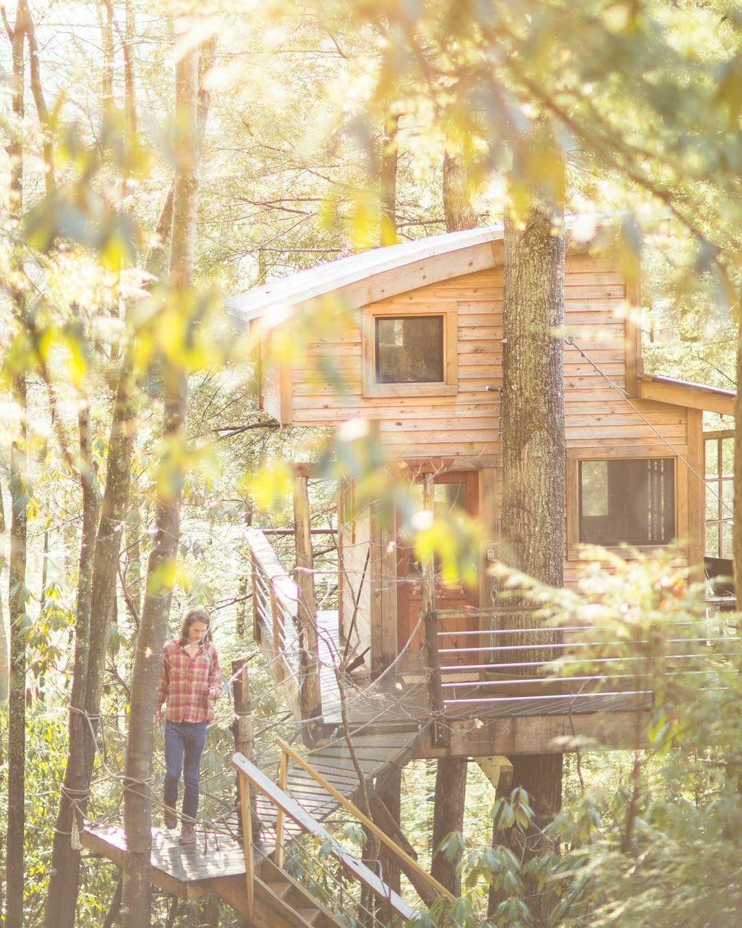 Basking photo by forestwoodward treehouserental