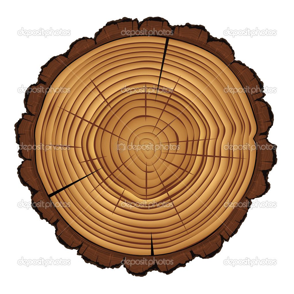 Trunk Stock Vectors Royalty Free Trunk Illustrations Depositphotos Tree Stump White Background Vector Images