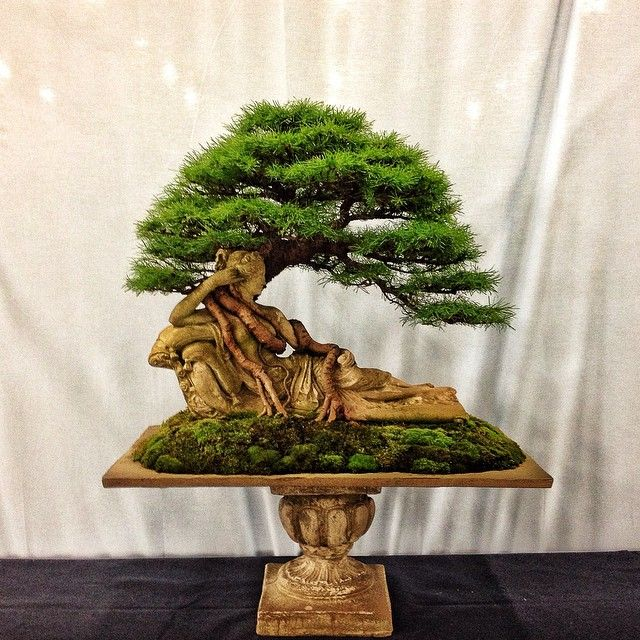 This Is A Larch Bonsai Growing On A Statue Of Penelope It 640 x 480