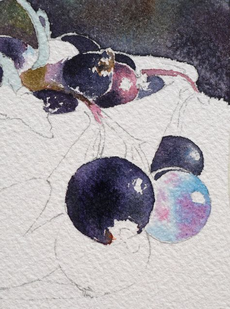 13 Aquarelle Cassis Groseille Watercolor Lessons