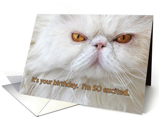 Birthday card angry cat photograph white Persian humor card – Persian Birthday Cards