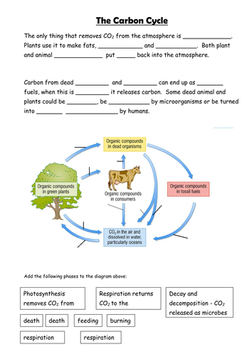 Carbon cycle | ecology | Carbon cycle, Biology classroom ...