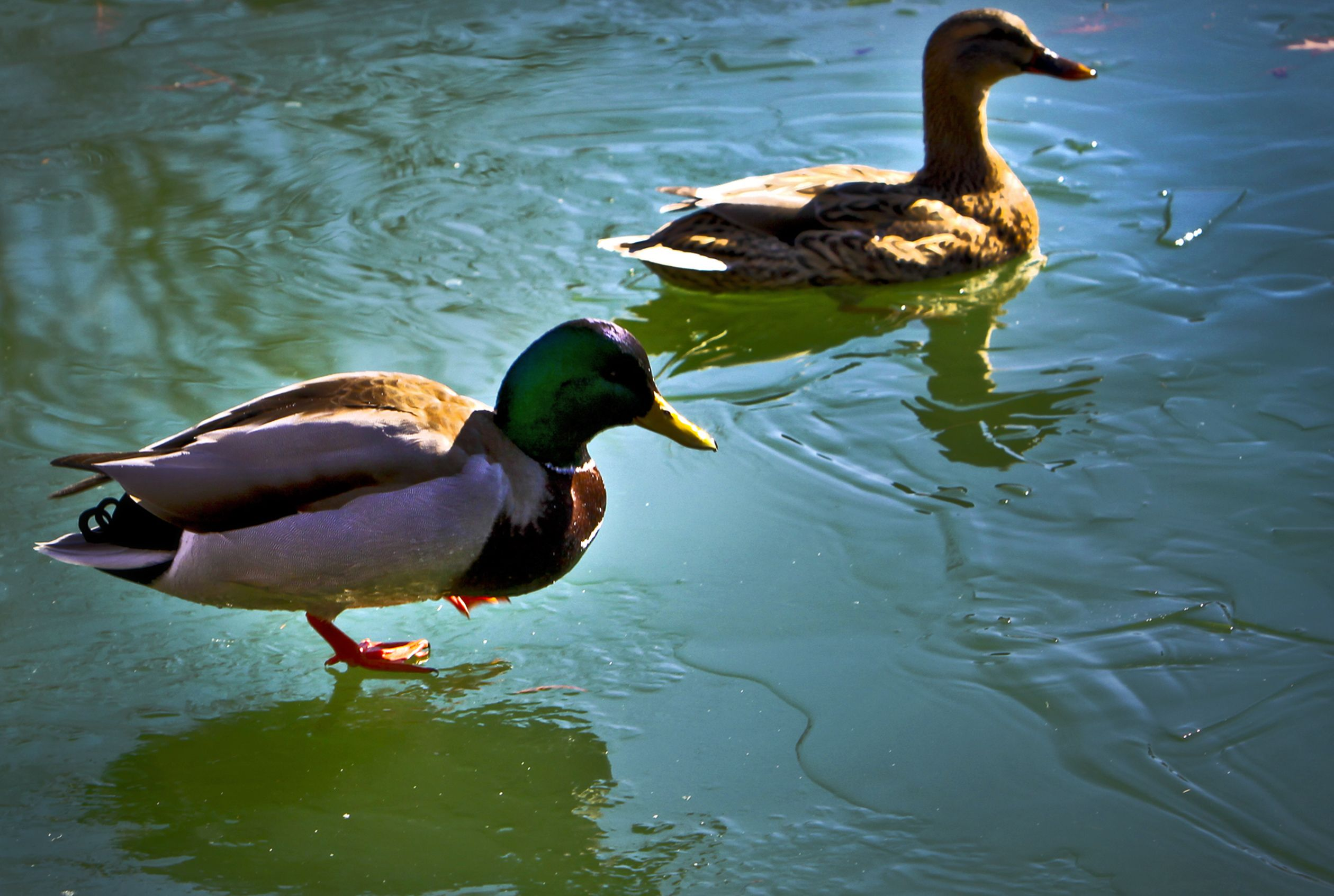 Here S Why Not To Feed Bread To Ducks And What To Feed Instead