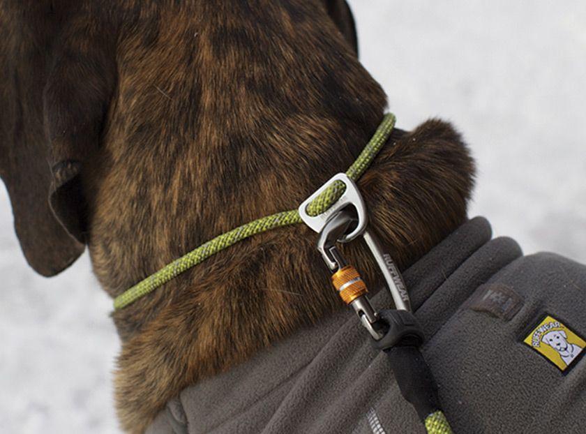Knot A Collar Custom Dog Collars Cool Dog Collars Dog Accessories