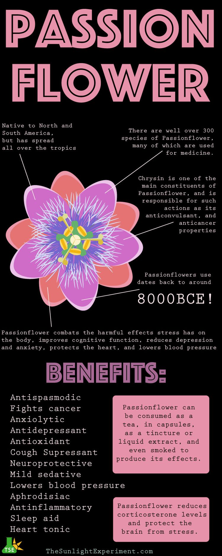 Passionflower Passiflora Incarnata Uses Benefits Safety Passion Flower Herbology North And South America