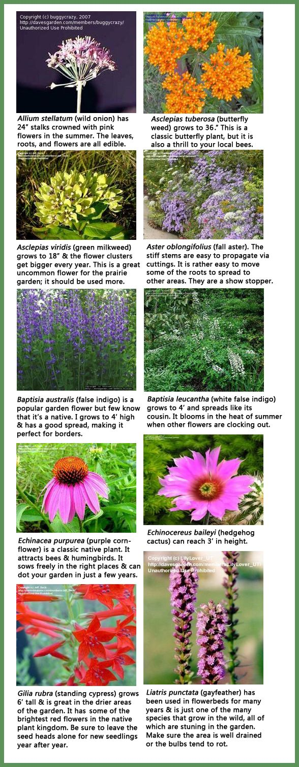 Some Of The Many Plants That Are Stunning In A Southern Garden. Any Of These