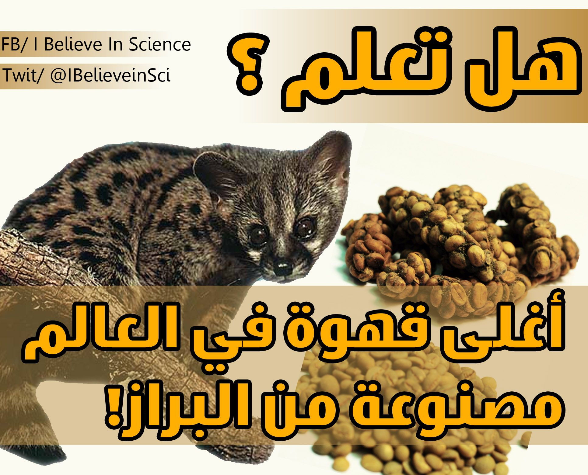 هل تعلم أغلى قهوة في العلم مصنوعة من البراز نعم هي القهوة المسماة بـ كوبي لواك أو قهوة الزباد تعد الأغلى عالمي ا بسعر يتجاوز ا Science Facts Science Facts