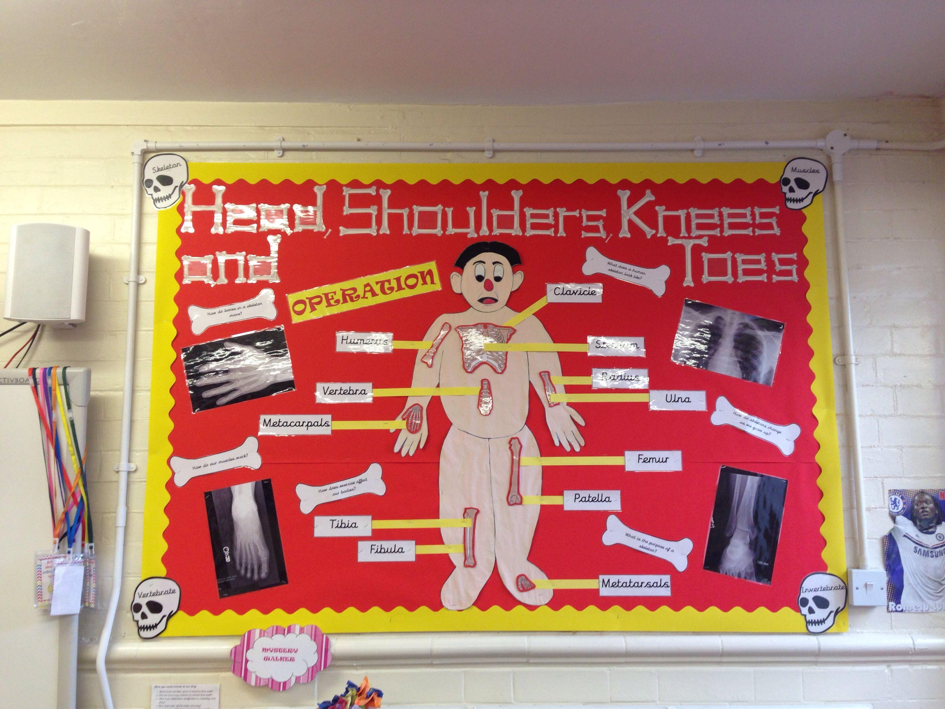 human organ systems for ontario grade 5 science (blog post, Skeleton