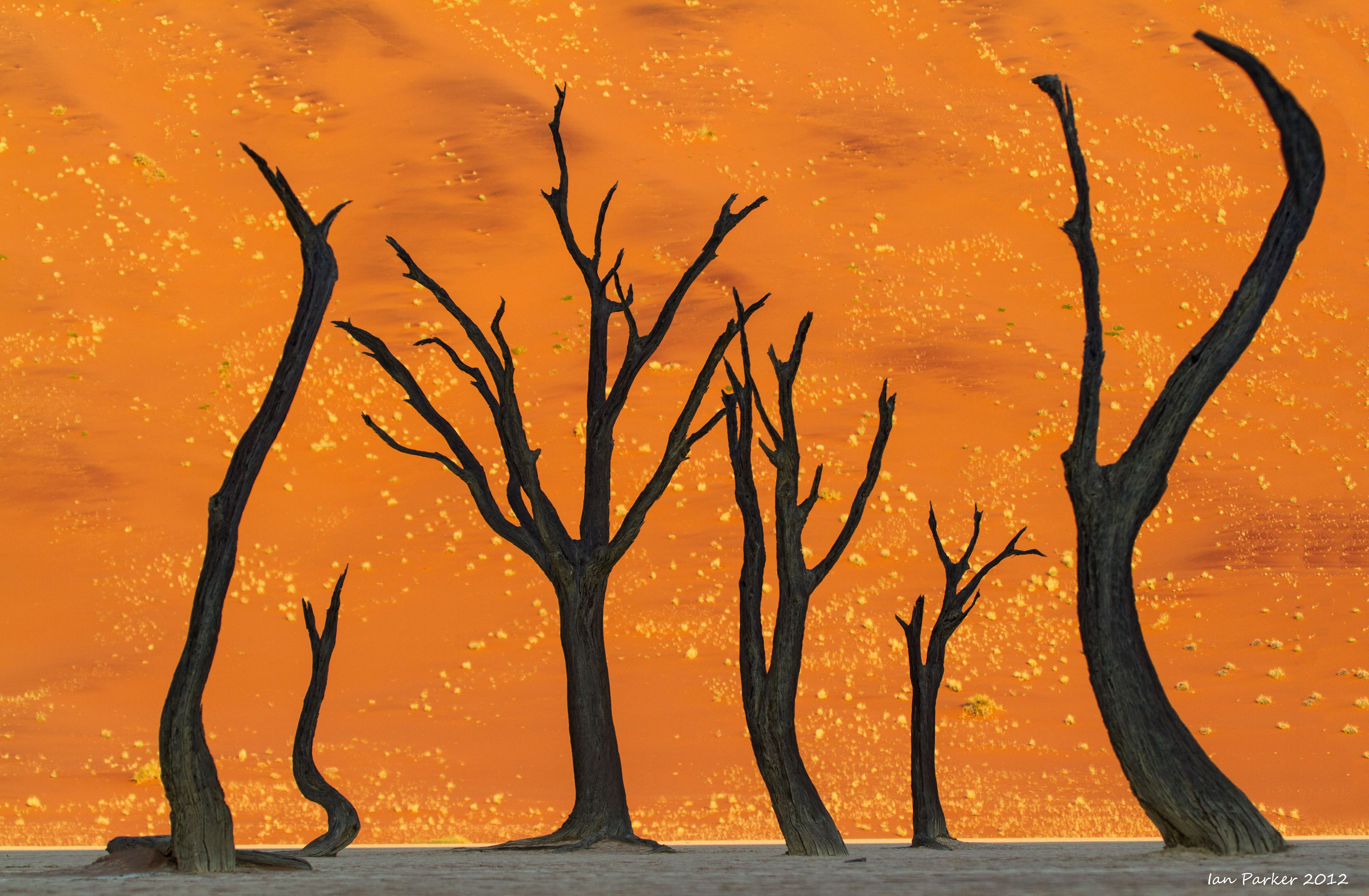 Art Wolfe Namibia Sinuous Tree Abstract 2 Deadvlei Namibia So Spooky Yet So Real