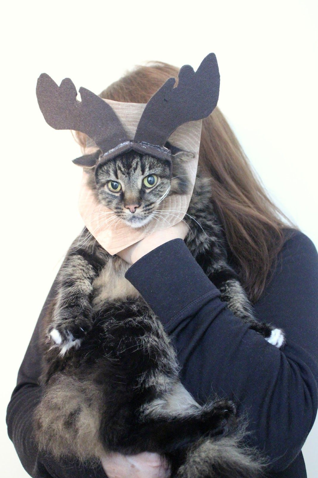 The Incredible Cat-Moose Costume DIY #MichaelsMakers  sc 1 st  Pinterest & The Incredible Cat-Moose Costume DIY #MichaelsMakers | Crafts 2015 ...