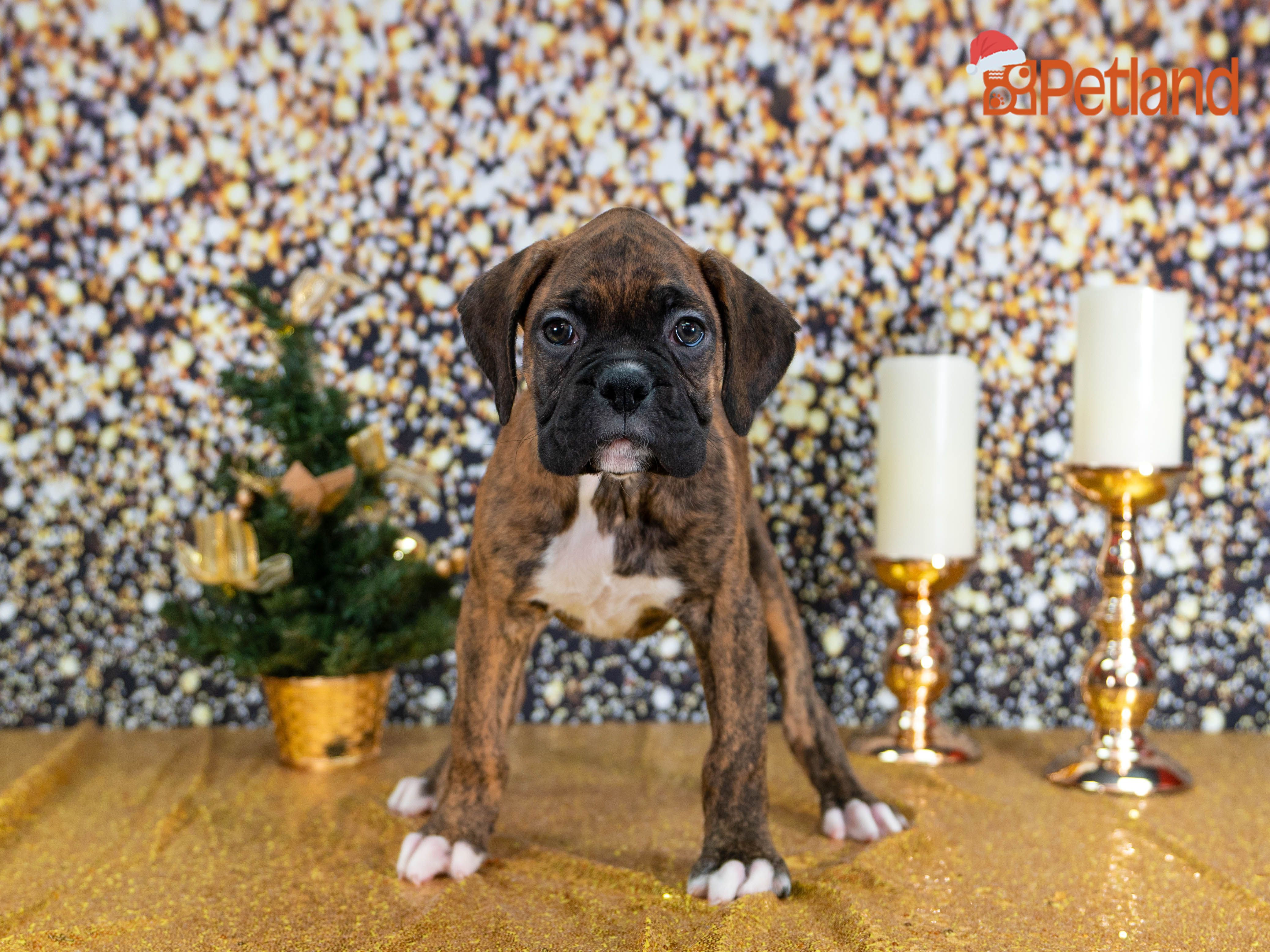 Puppies For Sale Puppy Friends Puppies Dog Lovers