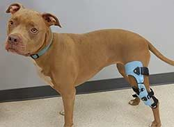 Dog Knee Brace Leg Braces For Dogs Canine Knee Braces