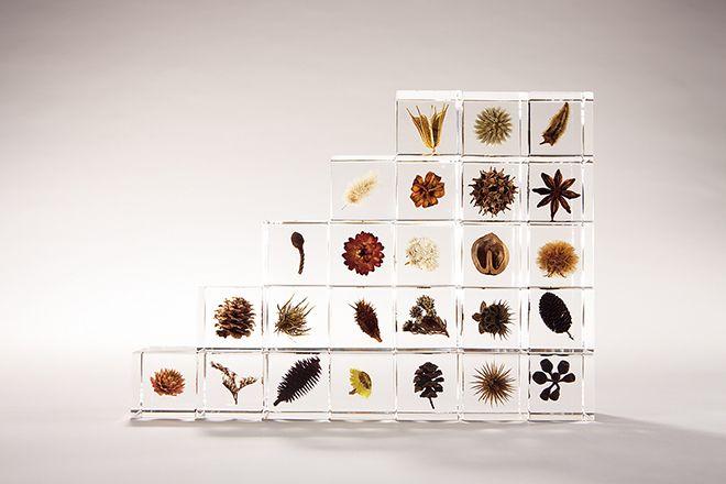 自然の造形美をアクリルに閉じ込めた Sola cube 販売開始