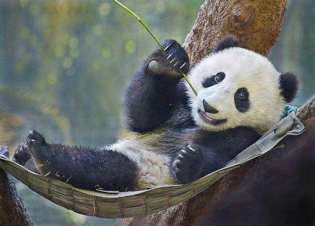 Lounging in my favorite hammock