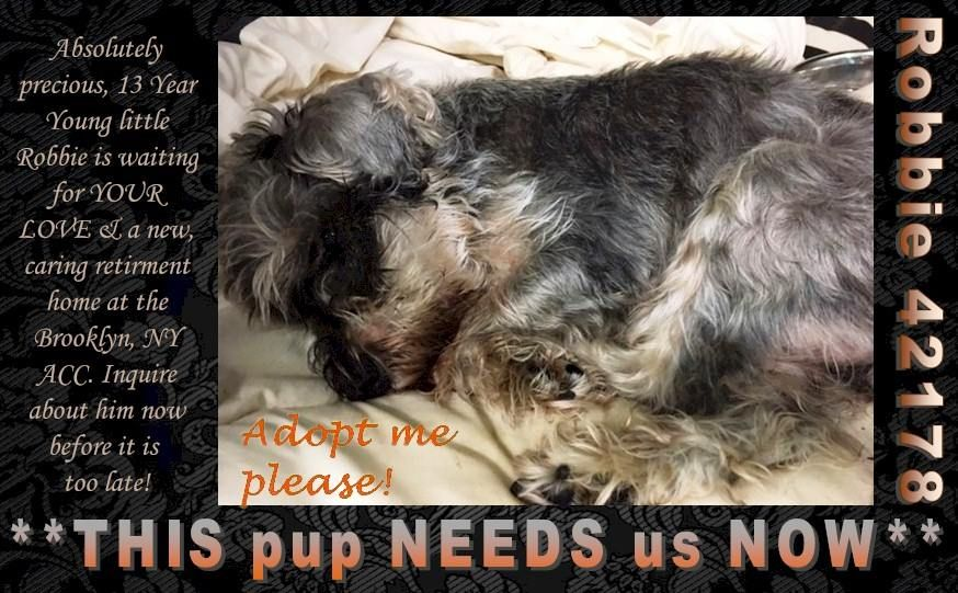 **THIS pup NEEDS us NOW** Absolutely precious, 13 Year