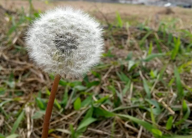 免费图片 蒲公英 花 田野之花 自然 花 白色 蒲公英的花 Hippopx In 2020 Flowers Dandelion Flower White Dandelion