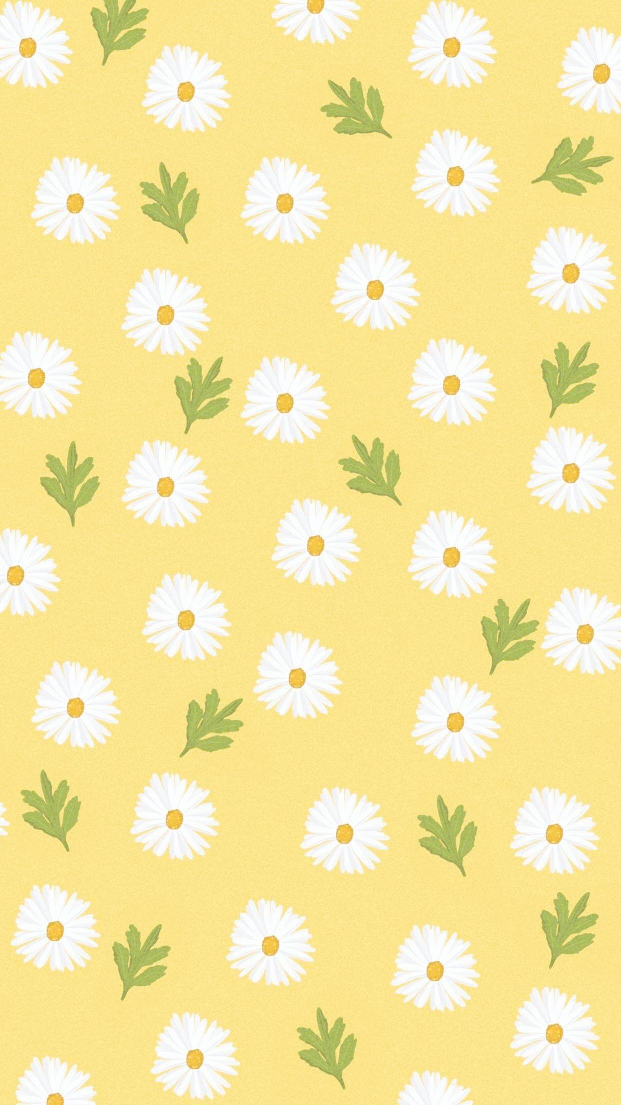 Nature White Daisy Flower iPhone 7 wallpaper Flowers