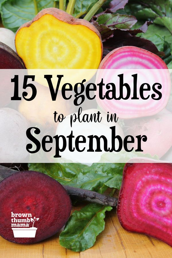 Plant these 15 vegetables in September!