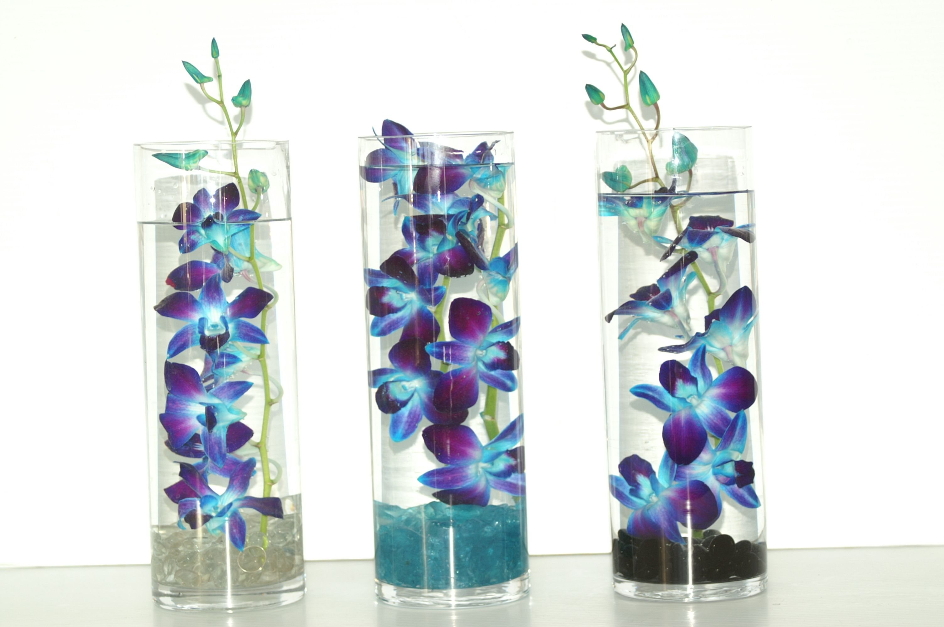Tinted blue Dendrobium Orchids submerged in glass Cylinders with ...