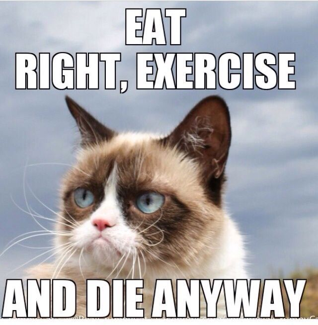 Eat Right Exercise And Die Anyway Funny Grumpy Cat Memes Grumpy Cat Humor Grumpy Cat