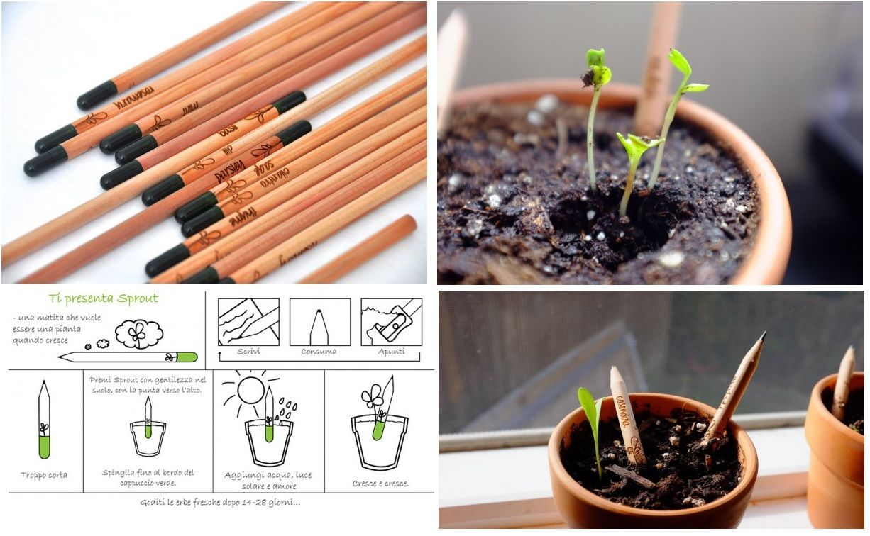 Novità - #Sprout la matita che cresce #cancelleria #scuola #ufficio