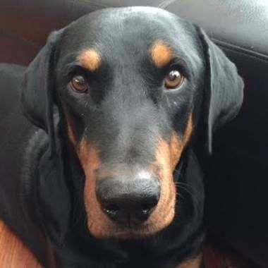 Adoptable Rescue Dog Calgary Alberta Canada Chien