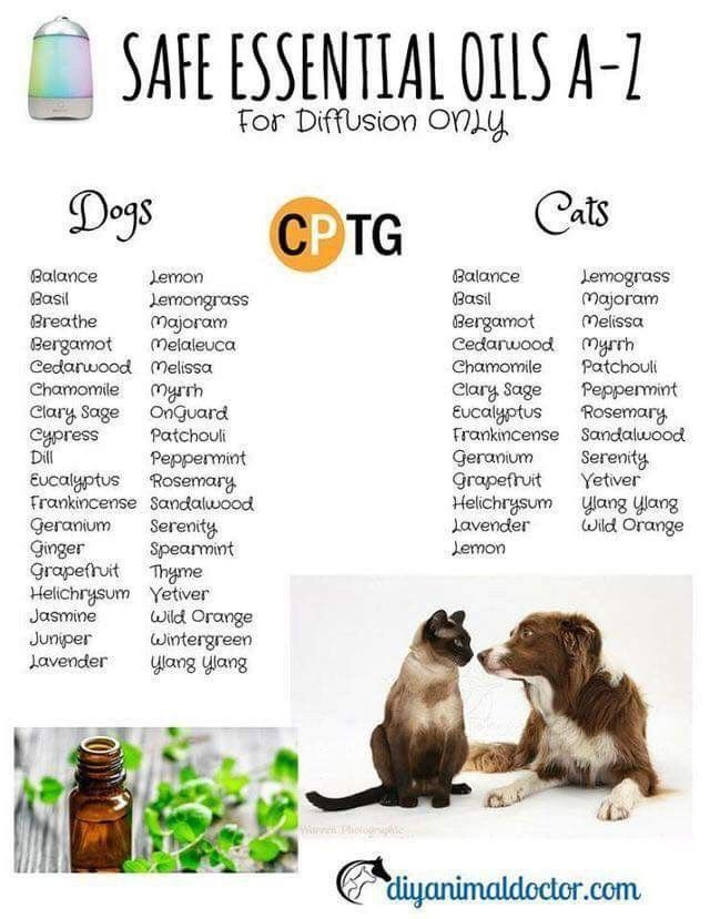 Oils For Pets Essential Oils Dogs Are Essential Oils Safe Oil Safe
