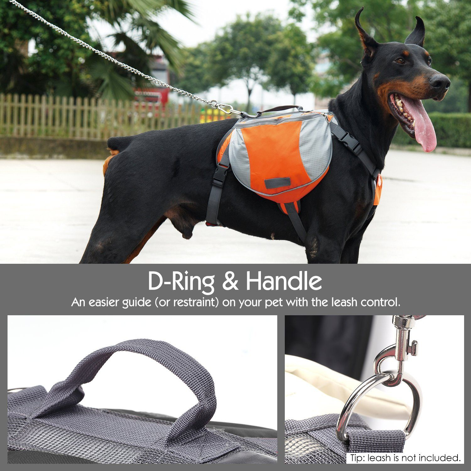 Picture Of Dog With Orange Saddlebags