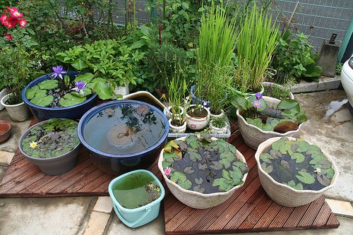 Diy Containers Garden Pond Container Water Gardens Small Backyard Gardens Small Water Gardens