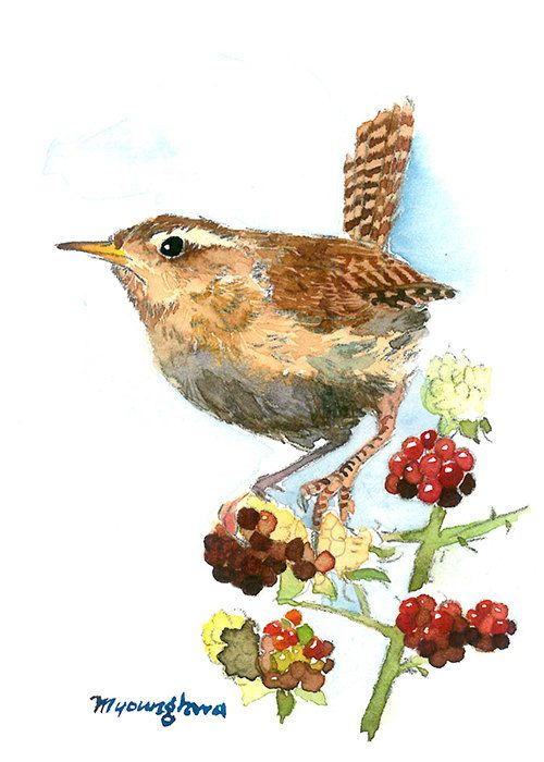 Cute marsh wren ACEO Limited Edition