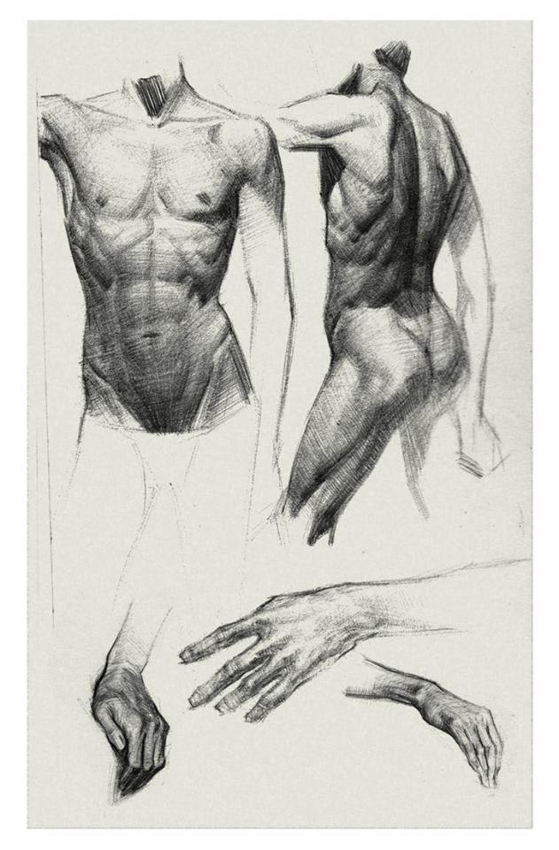 Pin de ch huang en anatomy | Pinterest | Anatomía humana, Anatomía y ...