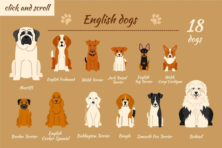 There Are All Of The Mixes Of Breeds Combining Looks And Temperament To Create A Kind Of Hybrid Of Two D Dog Breeds Chart Dog Breed Names Dog Breeds List