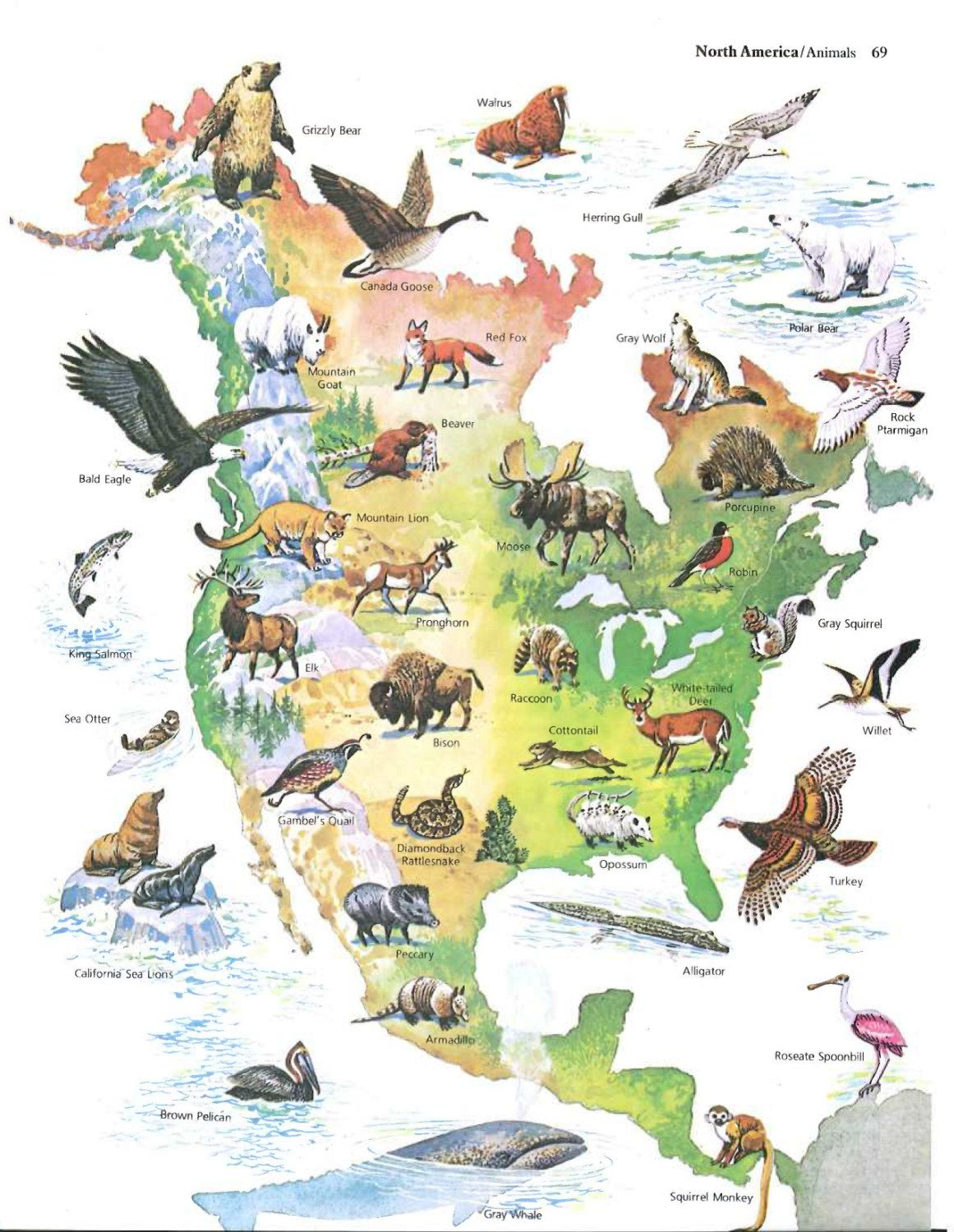 United States Map / Animals of America US Map Print / Vintage Map