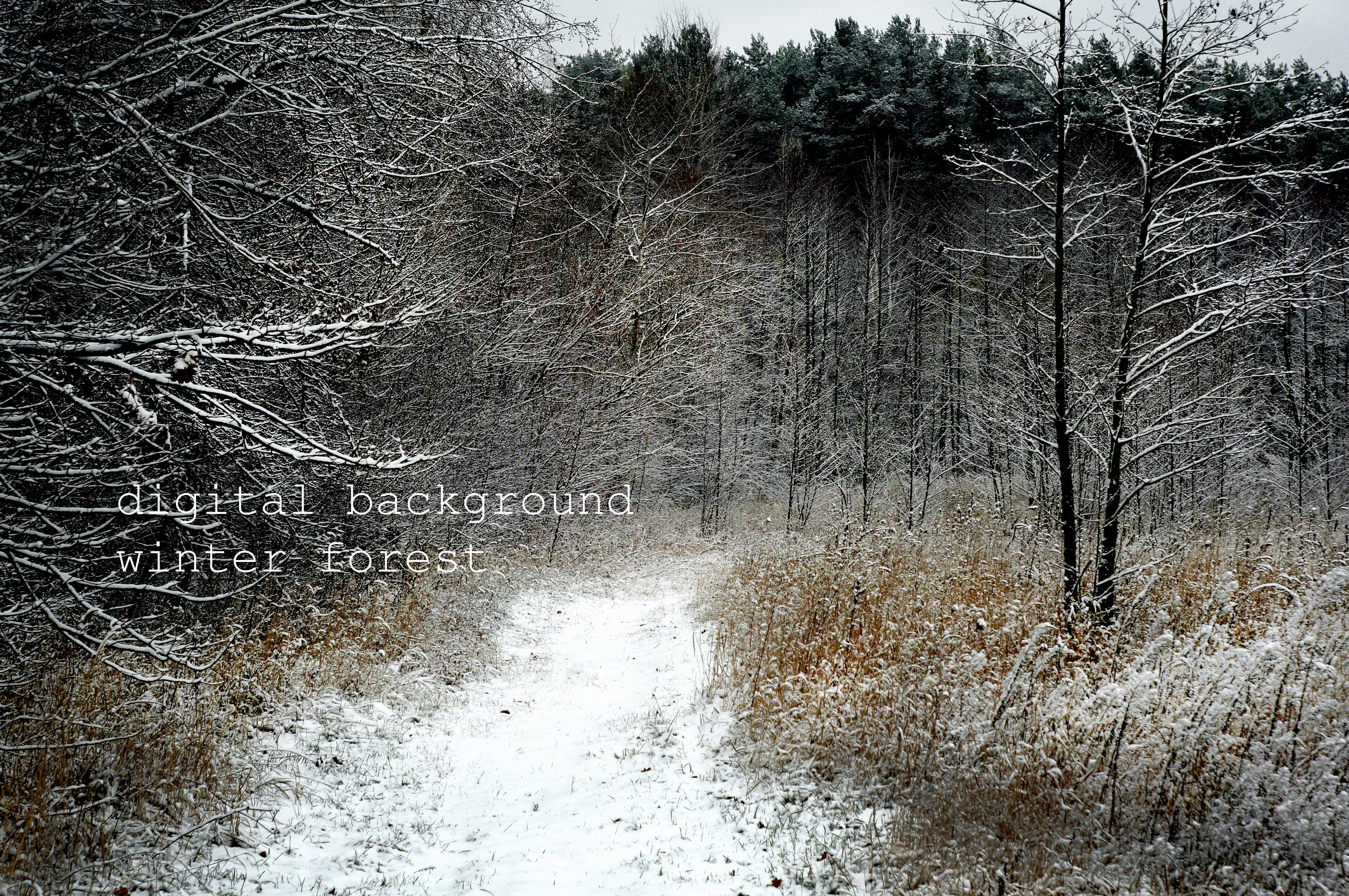 Winter Forest Winter Landscape Winter Forest Print Winter Wounderland Winter Photography Forest Wall Art Christmas Background Photoshop Winter Landscape Winter Photography Photoshop Digital Background