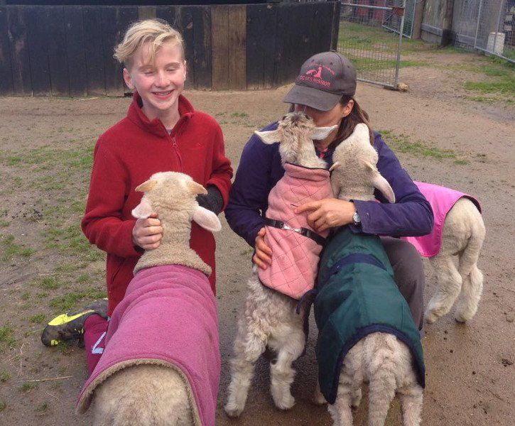 Too Sweet 13 Year Old Boy Donates His Birthday Money To Help Rescued Farm Animals With Images Animals 13 Year Old Boys Animal Rescue Stories