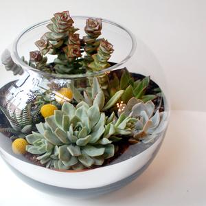 Succulents Mirrored Fish Bowl Garden Succulents Terrarium