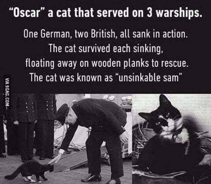 Unsinkable Sam Unsinkable Sam Cat Memes Dog Memes
