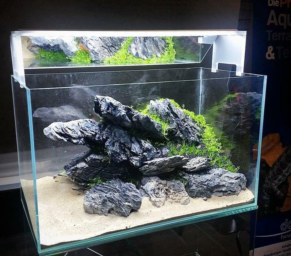 Aquascaping/Aquarium