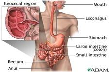 Concept Digestive System Diseases | Homeschool Health Digestion ...